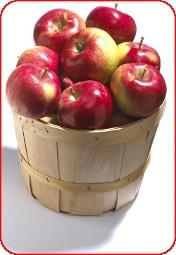 Ведро с яблокам