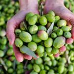 10 интересных фактов об оливках