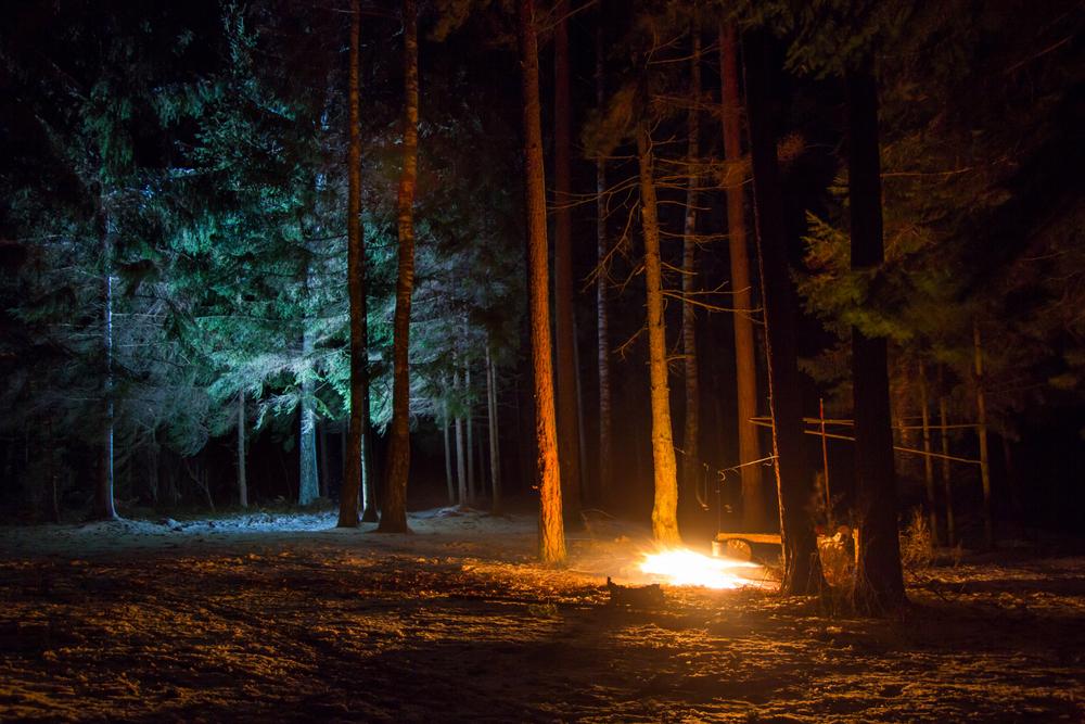 ночной лес, костер, via shutterstock