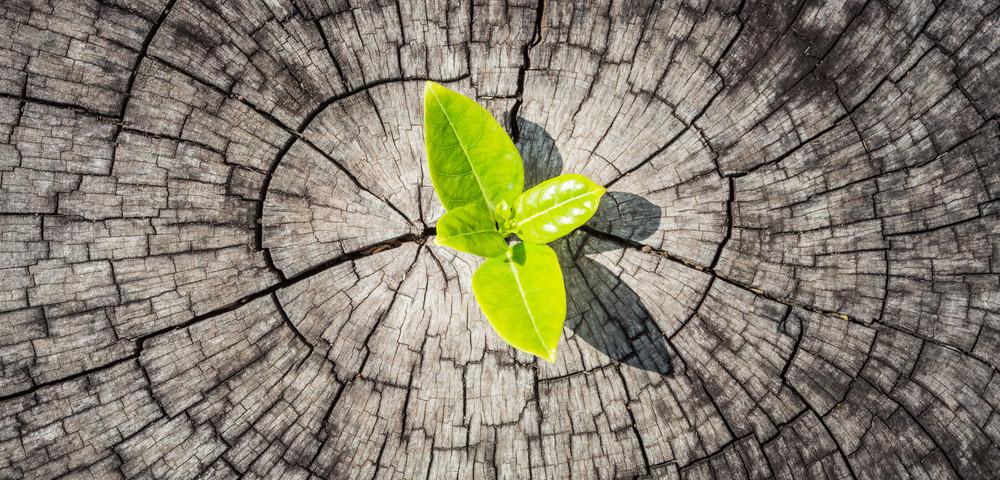 зеленый лист, via shutterstock