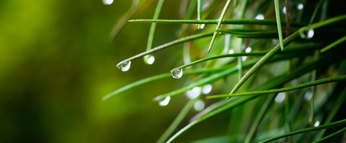 3 урока из даосской философии воды
