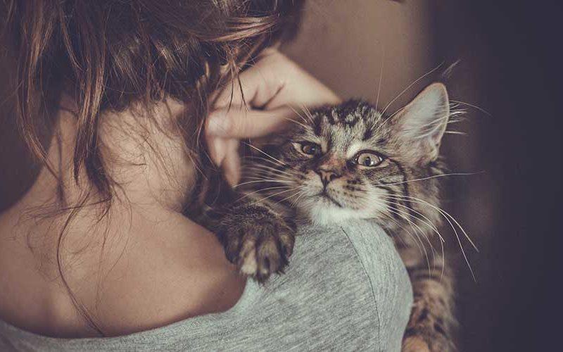 3 принципа буддизма, которым мы можем поучиться у кошек